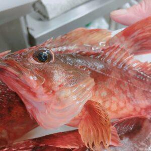 美しい魚介類パート②