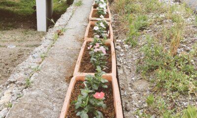 花壇づくり🌸